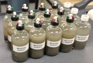 Microbes that Clean Up: Bioremediation of Pesticide-Polluted Banana Fields