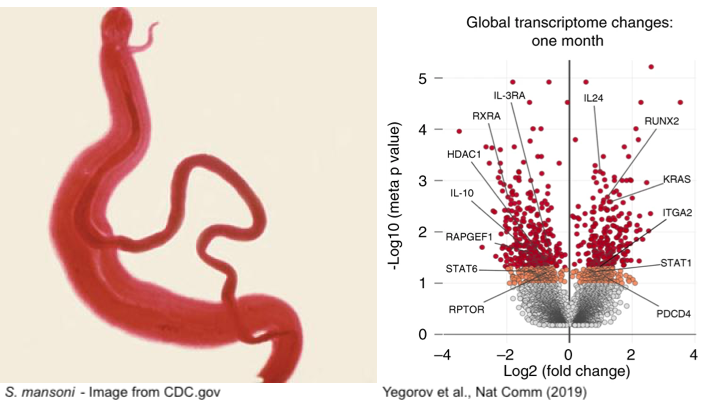 Killing Two Birds With One Stone: Preventing HIV Infection by Treating Parasitic Worms